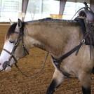Jerry Vawter Quarter Horses